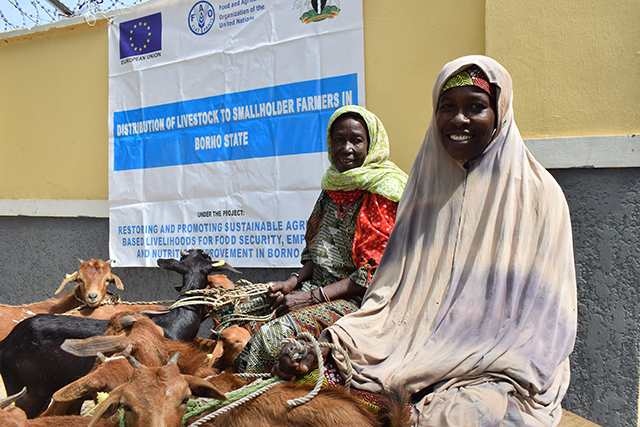 Women and youth receive livestock assets to restart their livelihoods