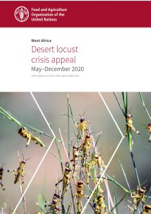 West Africa | Desert locust crisis appeal (May–December 2020)