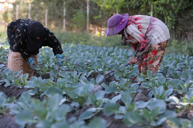 Belgium supports vulnerable small-scale farmers affected by the financial and economic crisis in Lebanon