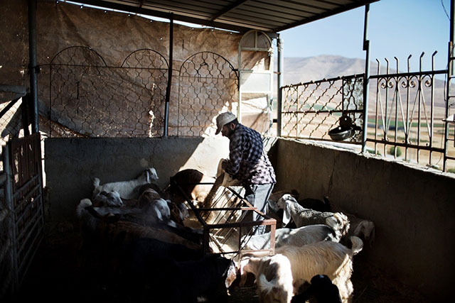 Protection of farmer livelihoods (West Bank)