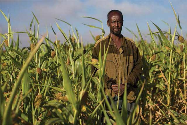 Securing a good harvest despite ongoing drought in Somalia