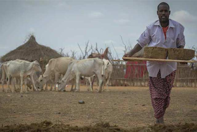 Assisting Ethiopian pastoralists to cope with recurrent drought