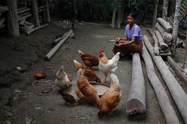 Detecting a high-risk strain of avian influenza for the first time in Myanmar