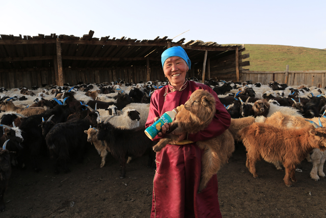 Forecast-based Financing (FbF) Webinar III: From Early Warning to Early Action in Mongolia - Bracing for the cold to protect livestock and livelihoods