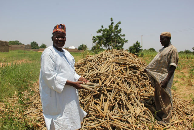 From rainy to dry season – sustained support brings relief to farmers in northeastern Nigeria