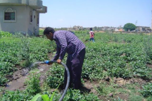 Supporting the livelihoods of farmers and women groups in Syria