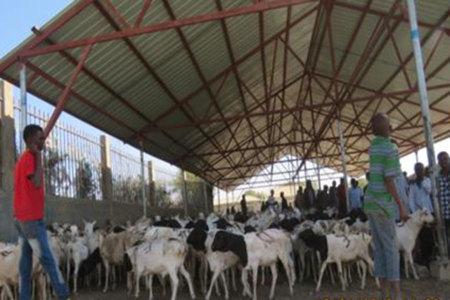 Enhancing the Somali Livestock Trade (ESOLT)