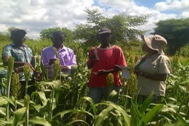 Building resilience of smallholder farmers by increasing small grains production and productivity