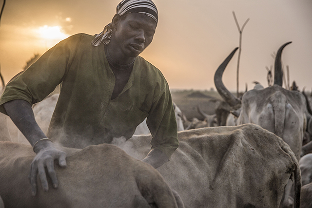 Recurring violence has halted farming and deprived communities of livestock as a source of nutrition. ©FAO/Stefanie Glinski