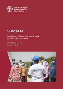 Somalia | Agricultural livelihoods and food security in the context of COVID-19