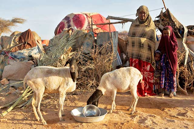 FAO makes massive strides in famine prevention programme in Somalia