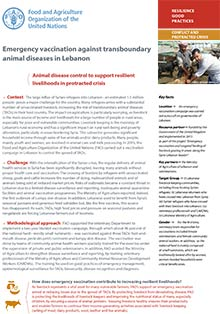 Emergency vaccination against transboundary animal diseases in Lebanon