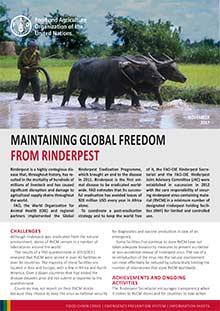 Maintaining global freedom from rinderpest