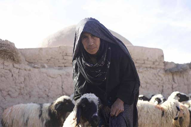 Farmers urgently need seed and animal feed support in Afghanistan as they grapple with drought