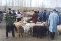 Kyrgyzstan: Flash Appeal 2008
