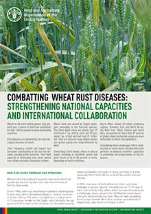 Combatting wheat rust diseases: Strengthening national capacities and international collaboration