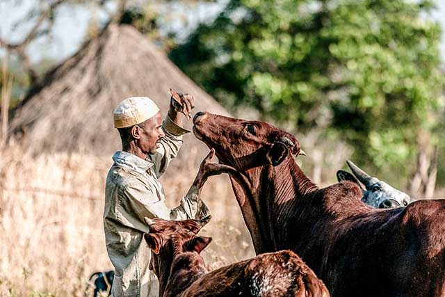 Strengthening social cohesion among communities in the Central African Republic and Chad through sustainable management of cross-border transhumance
