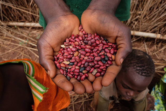 UN agencies provide seeds, tools and food to break hunger cycle in the Central African Republic