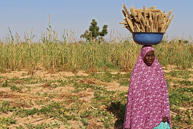 frozen foods business plan in nigeria conflict