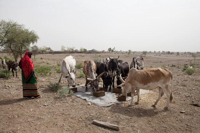 Ethiopia : FAO in Emergencies