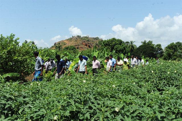 Home Vegetable Garden In Sri Lanka