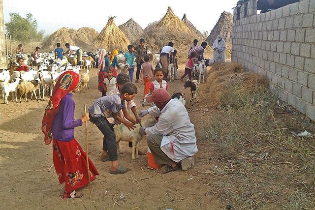 yemen fao in emergencies