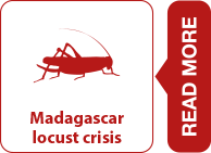 Read more about FAO in emergencies and the locust crisis in Madagascar