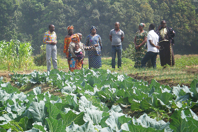 Sierra Leone: Farmers express concern over their livelihoods in the face of the Ebola outbreak
