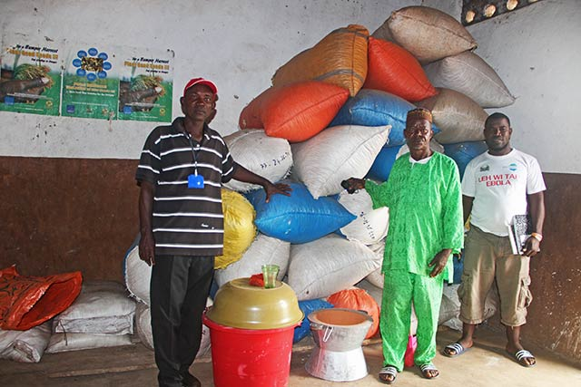 Ebola recovery support boosts farmers in Sierra Leone