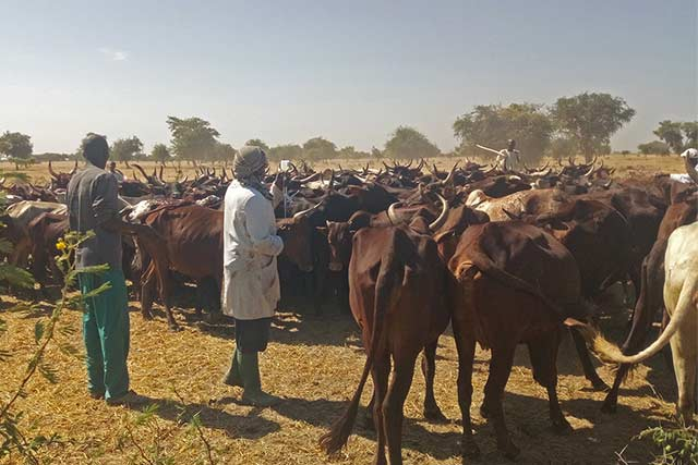 FAO boosts capacity of veterinarians in West and Central Africa