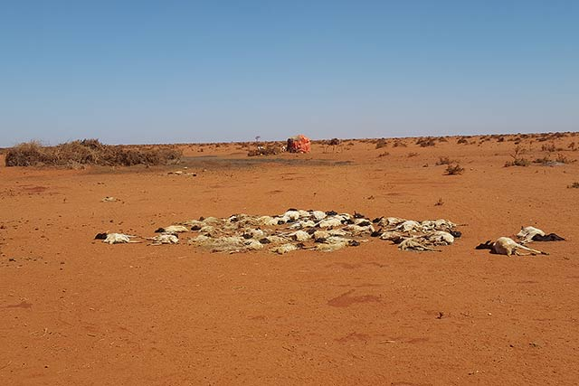 Emerging drought threatens pastoralist livelihoods in southern Ethiopia