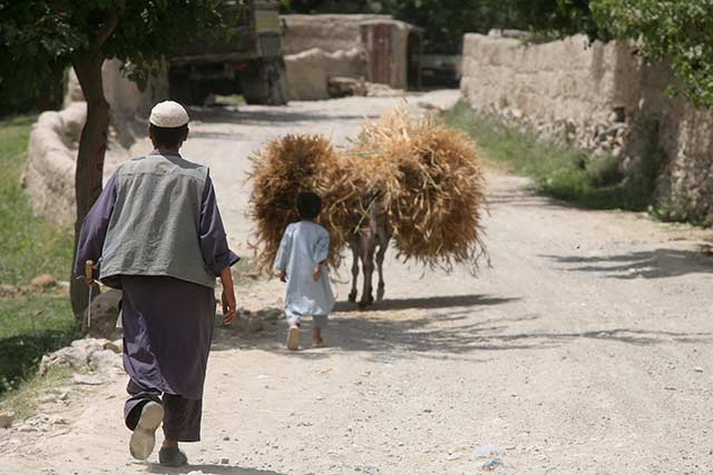 Severe food insecurity on the rise in Afghanistan