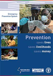 Prevention saves lives, livelihoods and money