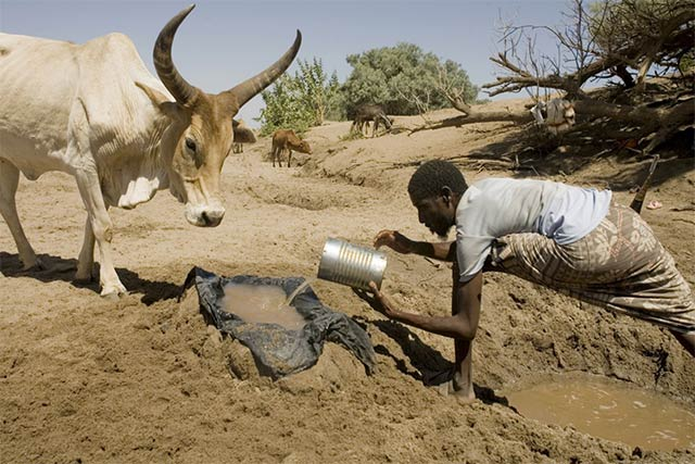 New and continued drought in the Horn of Africa threatens livelihoods and food security