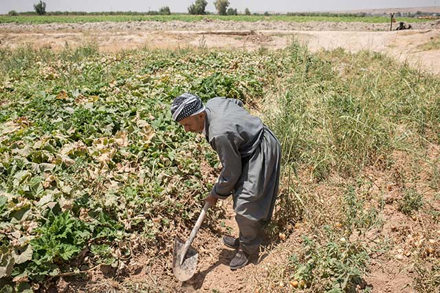 Japan to support livelihoods, food production and resilience of conflict-affected farmers in Iraq