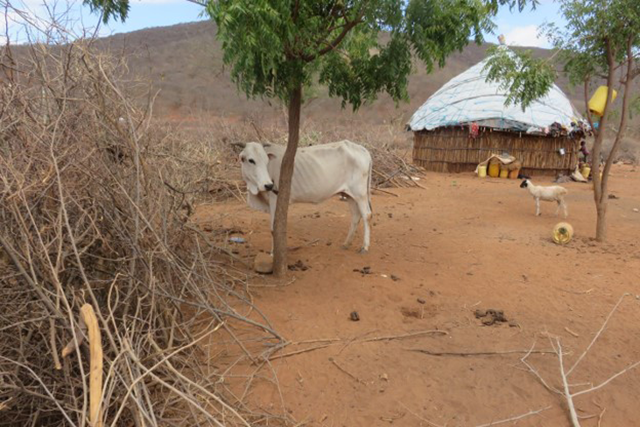 Boosting emergency drought response in Kenya