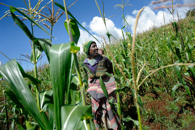 A boost to half of Lesotho's rural farmers
