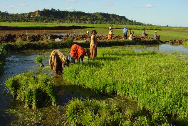 Fighting high food prices in Madagascar