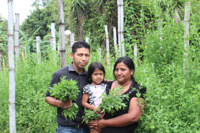 Farmers in El Salvador adapt livelihoods to the new realities of COVID-19