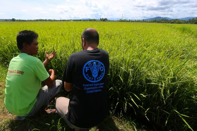 Families in Mindanao have seen significant benefits, monetarily and otherwise, from FAO's Anticipatory Action support. ©FAO/ Mark Navales