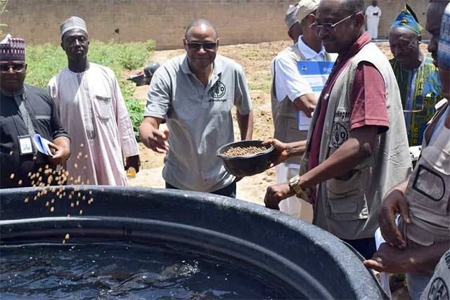 Promoting fish farming in northeastern Nigeria with support from the European Union Trust Fund