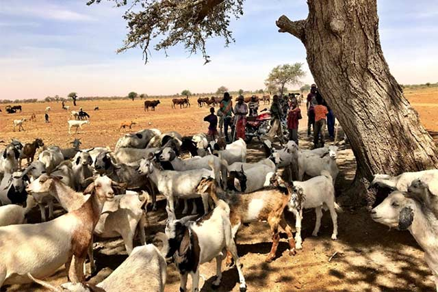 Early actions to support vulnerable herders in the Niger's Zinder and Tahoua regions