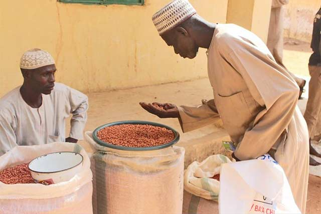 Farmers select their 'seed of choice' in FAO's first-ever seed fair in northeastern Nigeria