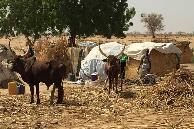 Food insecurity reaches extreme level in pockets of Nigeria's Borno State
