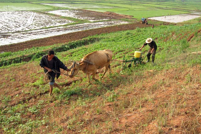 North Korea's food production falls for first time since 2010 as water scarcity hits agricultural sector