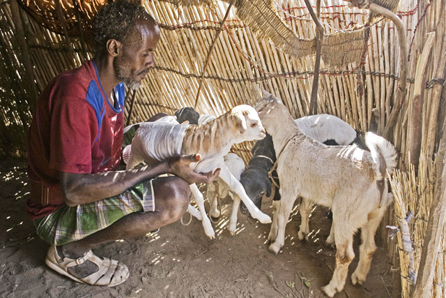 Improving agriculture sector drought response coordination in Ethiopia