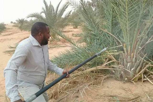 Emergency Assistance to Respond to Outbreak of Date palm green pit-scale in Libya