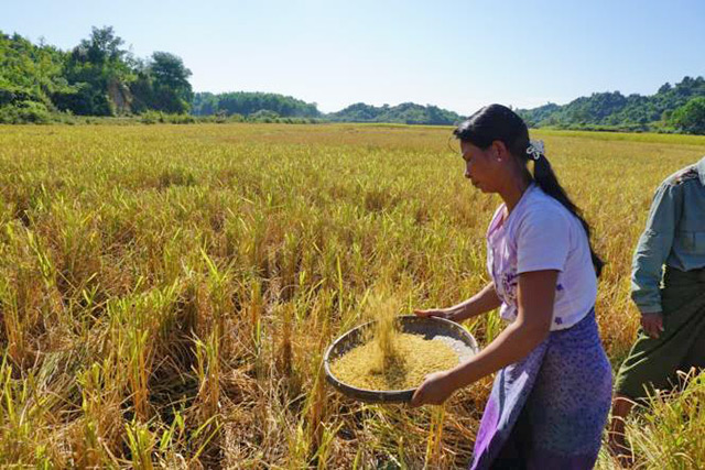 Enhance food security conditions of vulnerable communities in northern townships of Rakhine State