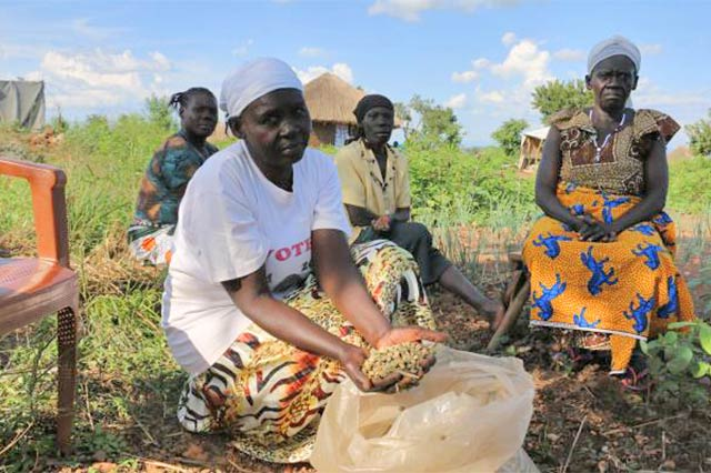 FAO's emergency response to the refugee crisis in Uganda