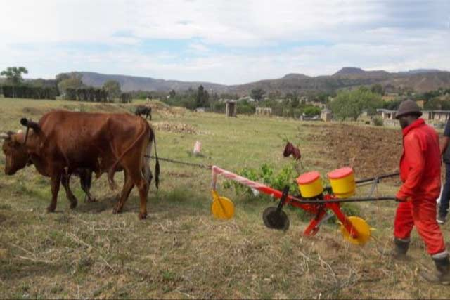 Emergency response to the El Niño-induced drought in Lesotho